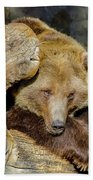 Big Brown Bear Beach Sheet