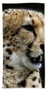 Big Cats 101 Beach Towel
