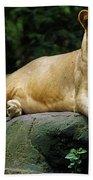 Big Cats 114 Beach Towel
