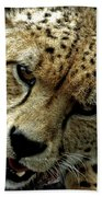 Big Cats 50 Beach Towel
