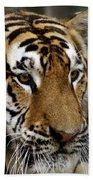 Big Cats 78 Beach Towel
