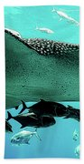 Big Fish Beach Towel