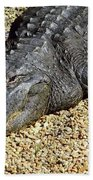 Big Gator Beach Towel