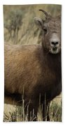 Big Horn Ewe-signed-#7480 Beach Towel