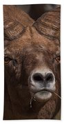 Big Horn Grazing Beach Towel