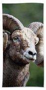 Big Horn Sheep Beach Towel by Scott Read