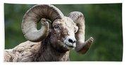 Big Horn Sheep Beach Towel