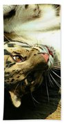 Big Kitty Fun Beach Towel