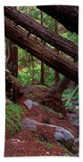 Big Sur Redwood Canyon Beach Towel
