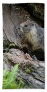 Big Tree Trail - Marmot - Sequoia National Park - California Beach Towel