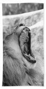 Big Yawn  Black And White Beach Towel