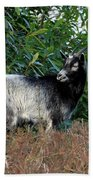 Kerry Mountain Goat Beach Towel