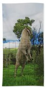 Billy Goat At The Lookout Post Beach Towel
