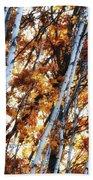 Birch And Oak And Sun Beach Towel