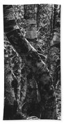 Birch Tree Forest Beach Towel