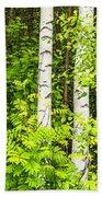 Birch Tree Panorama Beach Towel