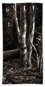 Birches In The Wood Beach Towel