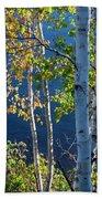 Birches On Lake Shore Beach Sheet