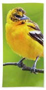 Bird And Blooms - Baltimore Oriole Beach Towel