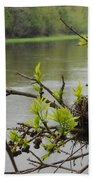 Bird Nest In Ash Tree Branches Beach Towel