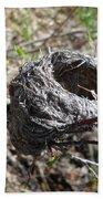 Bird Nest In Wild Rose Bush Beach Towel