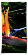 Bird Of Paradise Flower Beach Towel by Brian Harig