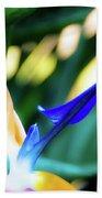 Bird Of Paradise Flower Beach Sheet