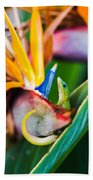 Bird Of Paradise Gecko Beach Towel