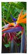Bird Of Paradise Kalon Beach Towel