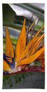 Bird Of Paradise Work Number Three Beach Towel
