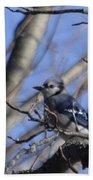 Bird On A Limb Beach Towel