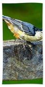 Bird With The Seed Beach Towel