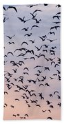 Birds A Flock Of Seagulls Beach Towel