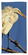 Birds - Great Egret Beach Towel