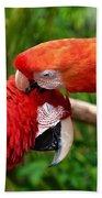 Birds In Love Beach Sheet