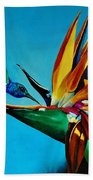 Birds Of Paradise With White Necked Jacobin Hummingbird Beach Towel