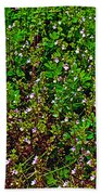 Birdsfoot Trefoil Surrounded By Tiny Bright Eyes In Campground In Saginaw-minnesota Beach Towel