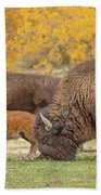 Bison Family Nation Beach Towel