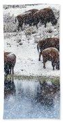Bison Snow Reflecton Beach Towel