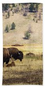 Bison With Calf Beach Towel