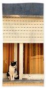Black And White Cat On The Windowsill Beach Towel