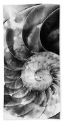 Black And White Nautilus Shell By Sharon Cummings Beach Towel