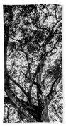 Black And White Tree 2 Beach Towel