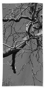 Black And White Tree Branch Beach Towel