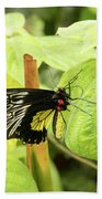 Black And Yellow Butterfly Beach Towel
