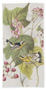 Black And Yellow Warblers Beach Towel