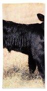 Black Angus Baby Calf Beach Towel
