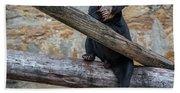 Black Bear Cub Sitting On Tree Trunk Beach Sheet
