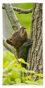 Black Bear Pictures 82 Beach Towel