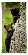 Black Bear Pictures 84 Beach Towel